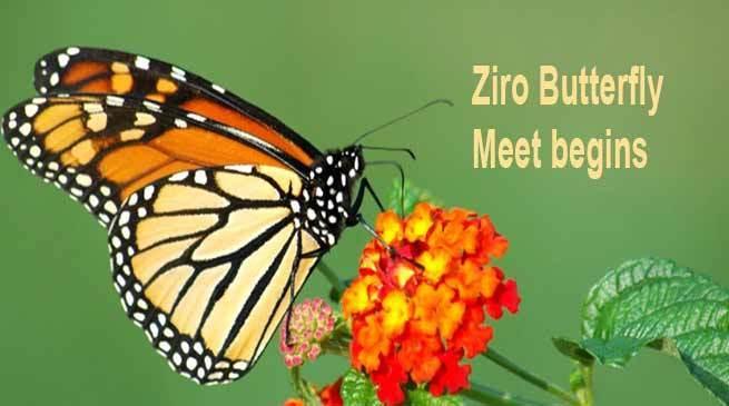 Ziro Butterfly