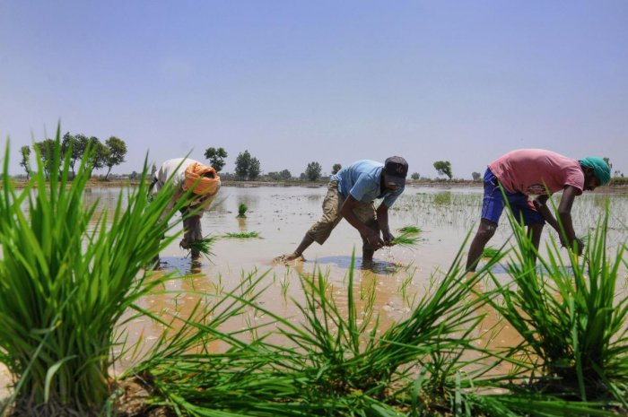 Varied Monsoon in Northeast Likely to Affect Crops