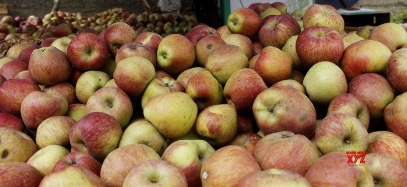 700 Truckloads of Apple Leave Jammu and Kashmir