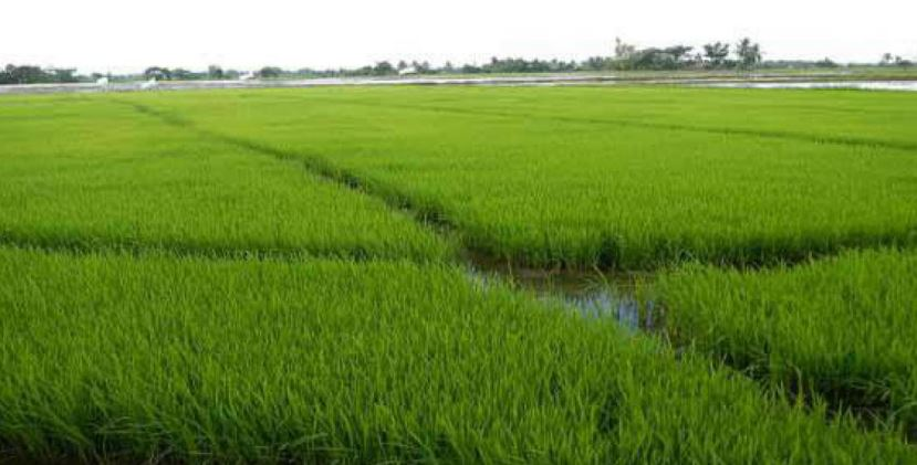 Fertilizer, Pesticide Trading to be Fully Online in Tripura: Officials