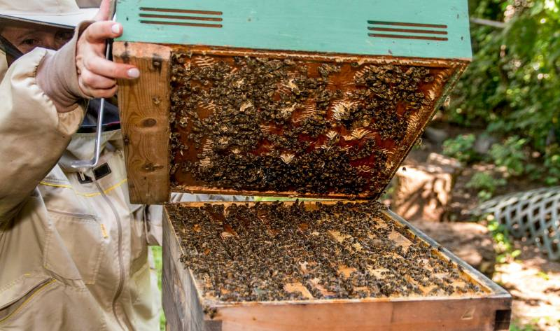 Meghalaya To Have NE's First Honey Bee Development Centre