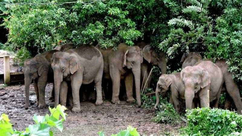 Safety of Jumbo: Captive Elephants Highest in Assam