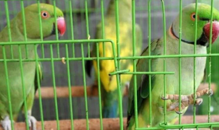 13 Parakeets were Seized in IGI Airport Presented before Delhi Court
