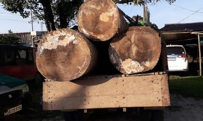 Hollong logs worth thousands seized in Digboi, Smugglers held by Bordumsa Police