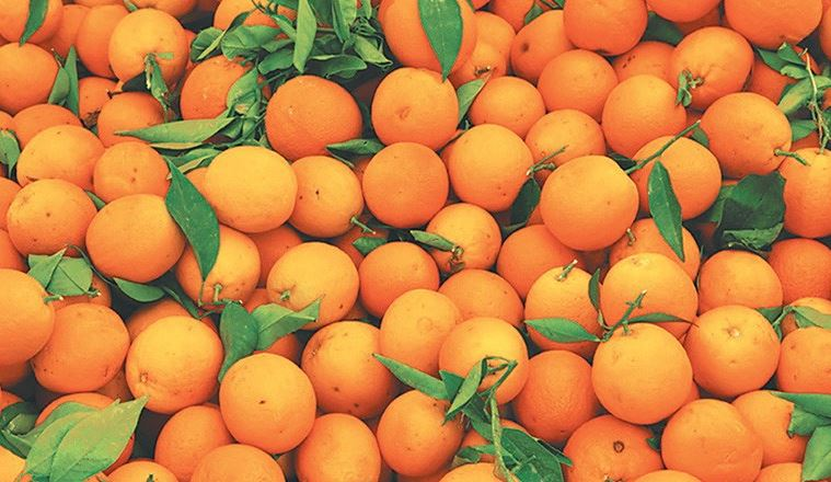 State-level Orange Festival of Tripura to start from November 12