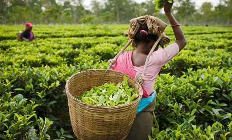 Tea workers in Silchar covered under preventive measures in view of Covid-19 pandemic