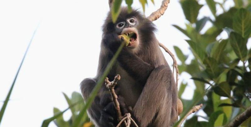 Concern raised over a decrease in monkey population: Mever Kumar Jamatia