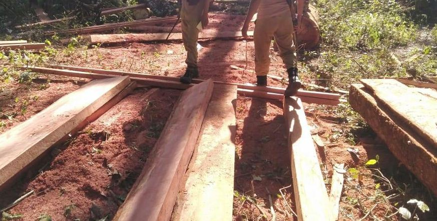 Illegal sawmill busted, two smugglers held in Kokrajhar