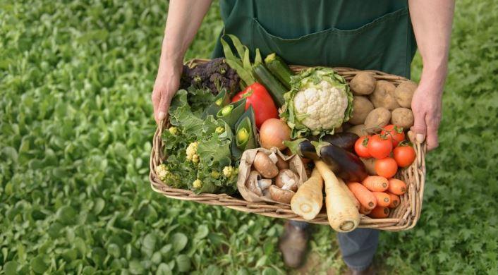 Pathsala woman grows organic kitchen garden, inspires others