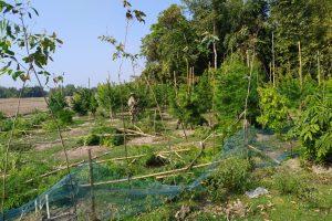 Cultivation of Hemp