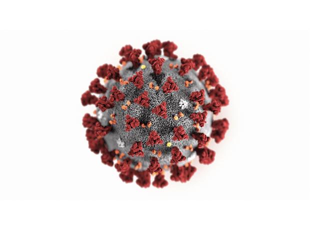 coronavirus cure - photo #49
