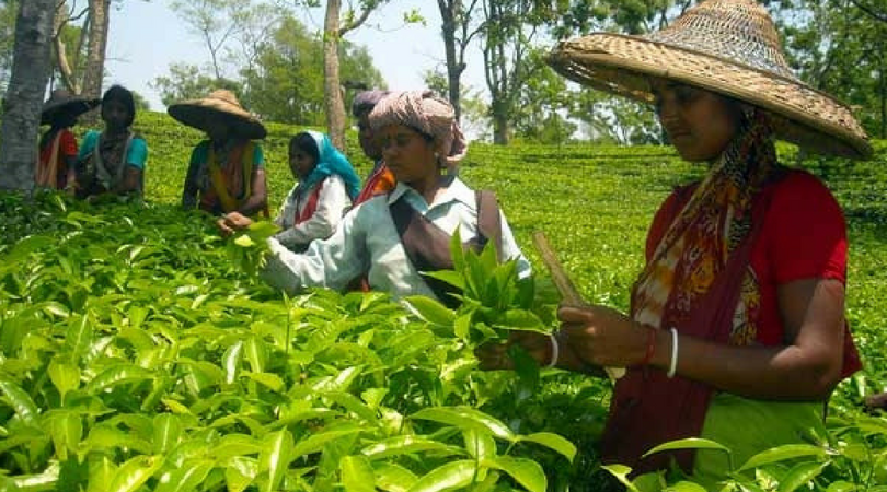 Non-supply of coal hits Tripura tea industry due to nationwide lockdown