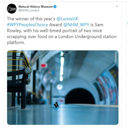 Mice fighting on London Underground wins wildlife photo of the year