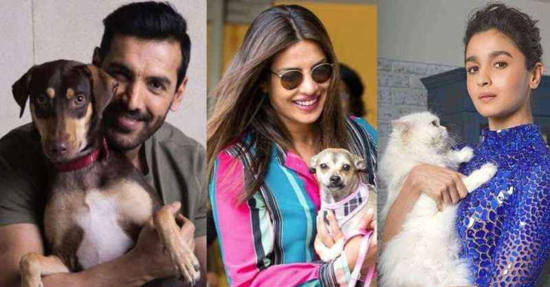 B-Town pets are Instagram superstars!