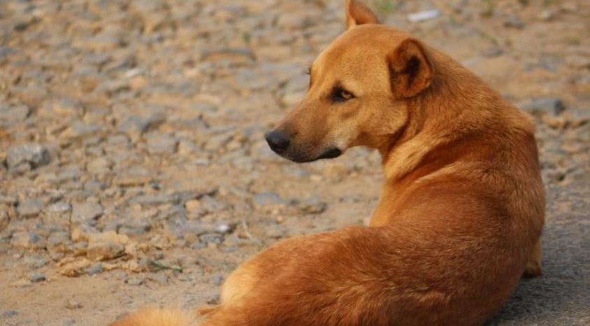 NGOs in Northeast commence drives to feed stray animals due to nationwide lockdown