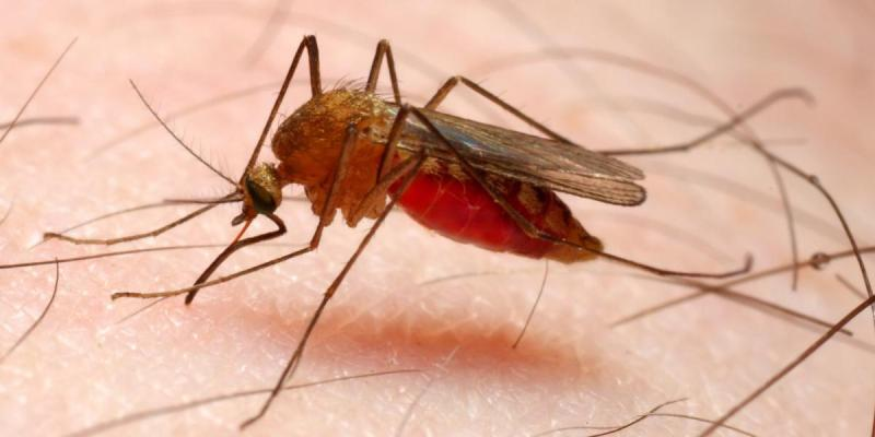 HEALTH: Challenges in Malaria Control in Assam