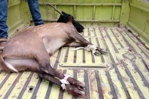 Deer Recovered