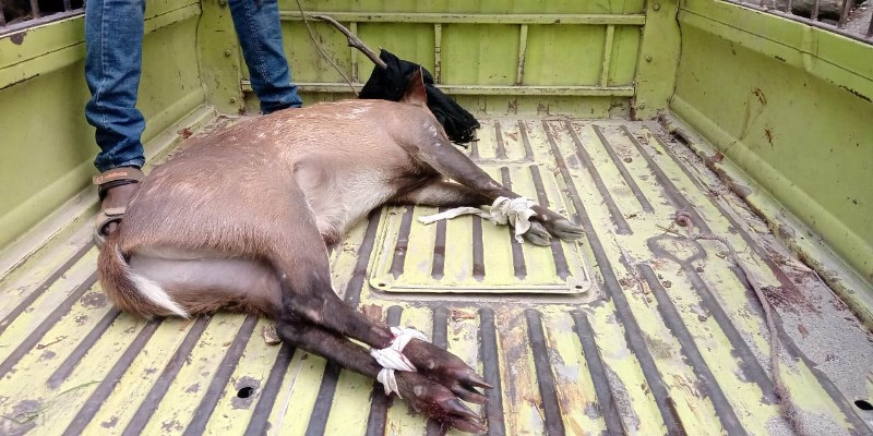 Deer Recovered, succumbs to injuries at Dhakuakhana in Lakhimpur district