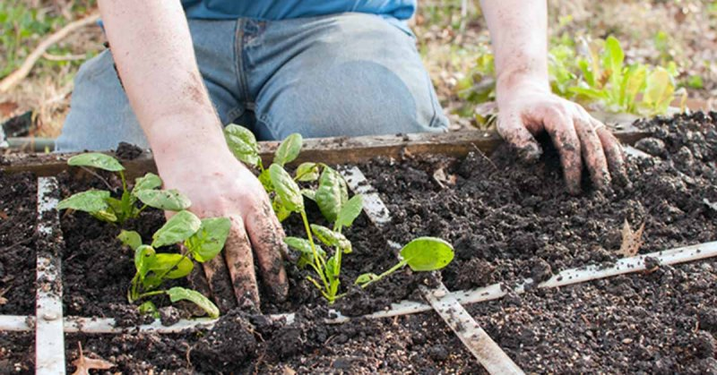 Gardening helps grow positive body image too