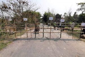 bamboo barricades