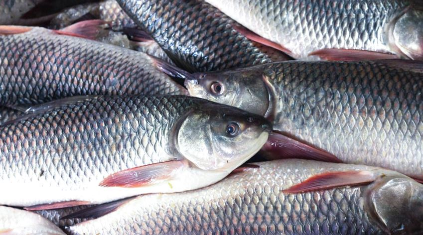 FISHFED starts door-to-door delivery of local fish in Guwahati City