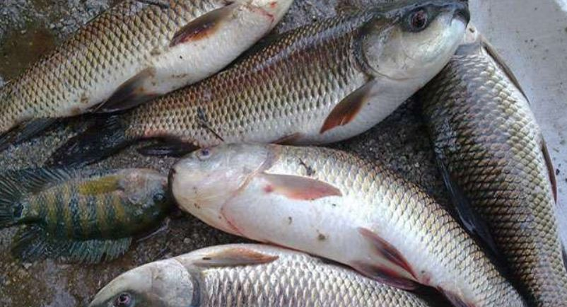 COVID-19 Lockdown: Door-to-door sell of fish in Guwahati from April 10, Friday