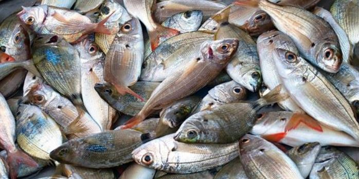 Take action against unauthorized individuals & vendors selling fish: Fishery dept. to DC