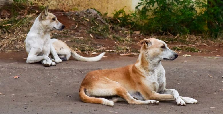 Paw Foundation comes to the rescue of stray dogs amid lockdown in Guwahati
